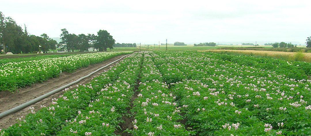 Subvenciones destinadas a la implantación de sistemas agroforestales y su mantenimiento
